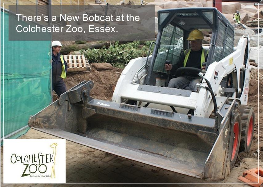 1380292360_zoo-bobcat-london